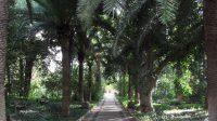 """Parco di Villa Landolina al """"Paolo Orsi"""" 3.jpg"""