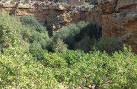 Giardino-Botanico-2.jpg