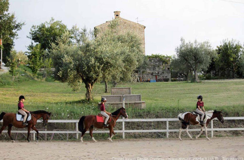 cavalli-1.jpg