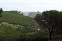 Rimboschimenti-sul-Monte-di-Billiemi.jpg