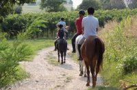 cavalli-2.jpg
