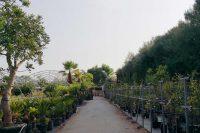 gitto-garden-4.jpg