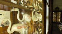 Museo di Zoologia Doderlein3.jpg